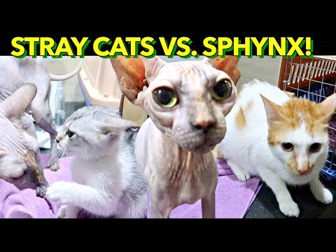 ✰PUSPIN Cats FIRST ENCOUNTER with ALIEN CAT? 'Where's Your Fur?!' 😱😂