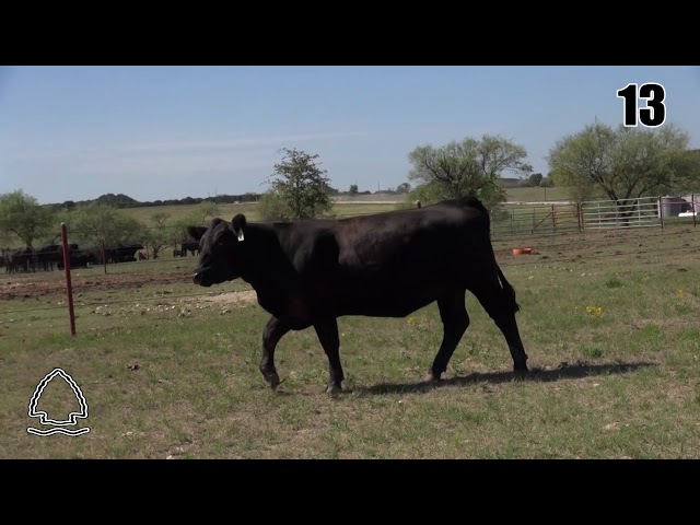Pearcy Angus Ranch Lot 13