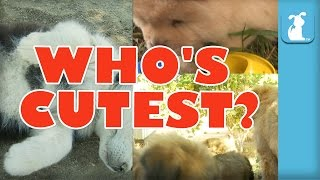 WHO'S CUTEST? YOU DECIDE! Which Puppy Is Cutest? (Episode 7)