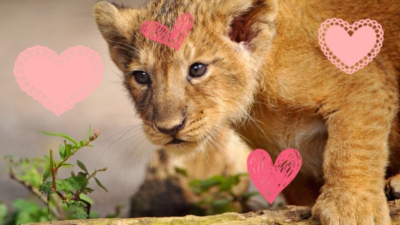 Милые животных для детей #7 / Cute animals #7 / ZOO for kids / Animals for kids