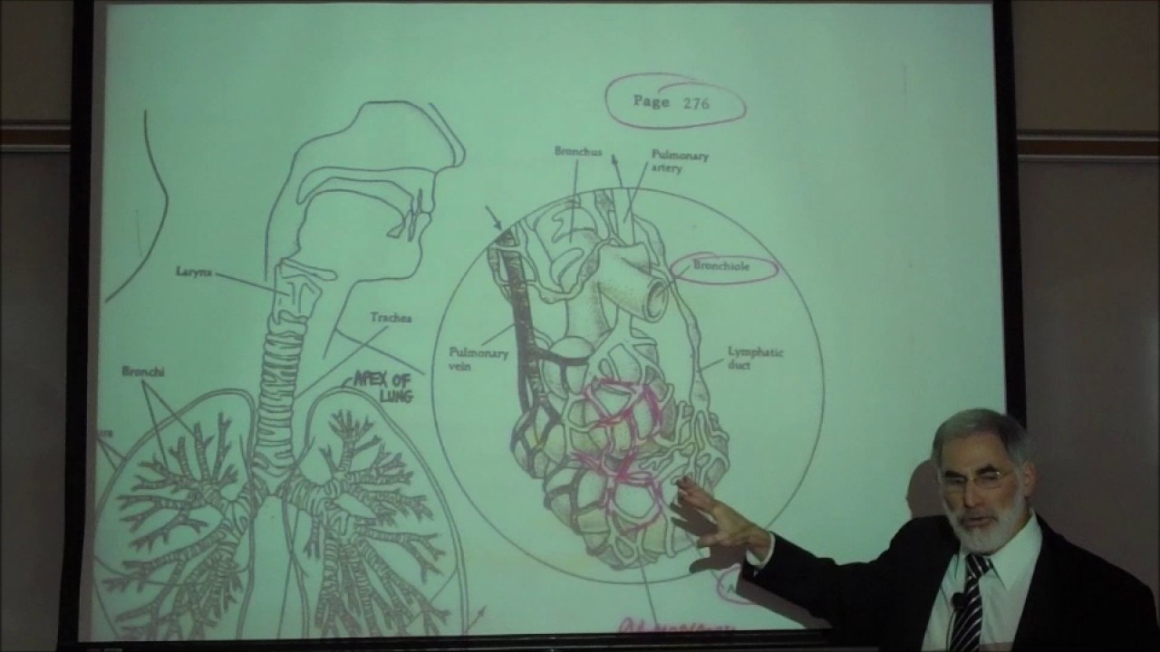 RESPIRATORY PHYSIOLOGY; INTRO & REVIEW OF FUNCTIONAL ANATOMY by ...