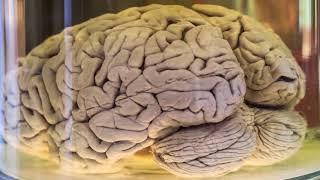 İnsan beyni haqda çox maraqlı faktlar İNANILMAZ