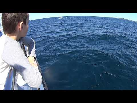 Nelson Bay Whale hunting 2017