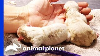 Mother Dog And Newborn Pups Need Emergency Care | Animal Cops Houston