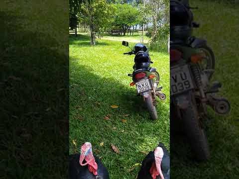 Perus revoltados com o dia de natal numa fazenda em Caldazinha Go, motoqueiro teve que ir embora