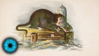 Frankensteins Erben: Forscher erschaffen Mensch-Ratte-Mischwesen - Clixoom Science & Fiction