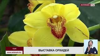 В Нью-Йоркском ботаническом саду открылась 17-я ежегодная выставка орхидей