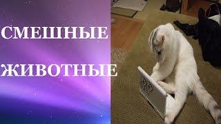Смешные животные. Смешные кошки видео смотреть бесплатно