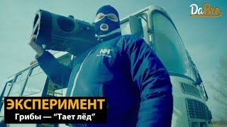 Эксперимент: Грибы - Тает лёд (Dabro remix)