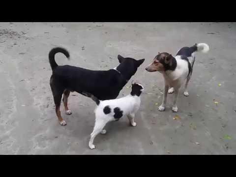 dog vs cat fight part2 |  dog vs cat friendly fight