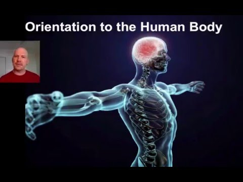 Orientation to the Human Body. 1 of 2.