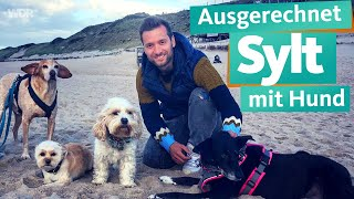 Of all places - Sylt with Dog | WDR Reisen