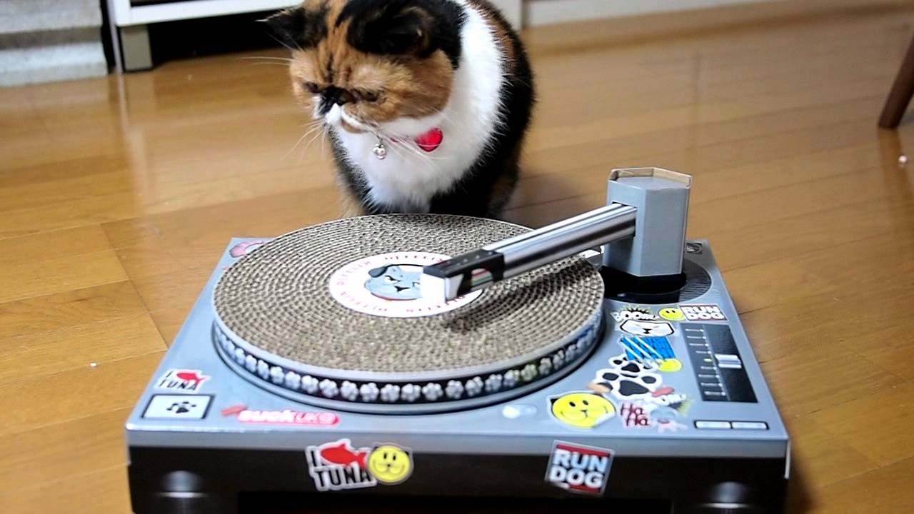 Cat Scratch Record Player