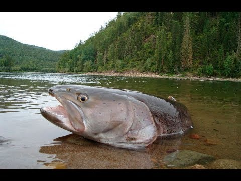 Русская рыбалка 31 37 прохождение, помощь, советы и