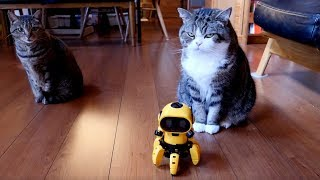 フォロとねこ。-Assembly robot and Maru&hana.- thumbnail