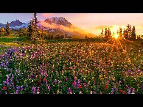 Richard Clayderman  - Dreams