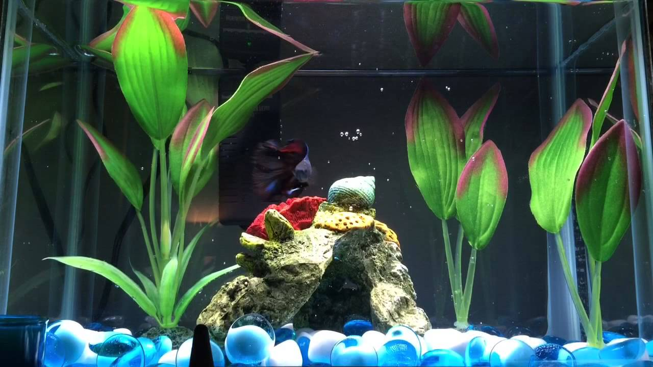 Cleaning my betta fish tank youtube for Cleaning betta fish tank