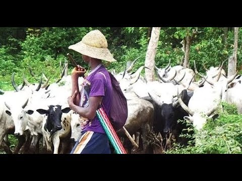 Why we attacked Benue communities - Miyetti Allah cattle breeders leader