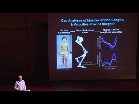 Dynamic Walking 2013 : Day 2 : Scott Delp : Insights from simulating gait dynamics and disorder
