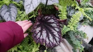 Plant Shopping At Phelan Gardens