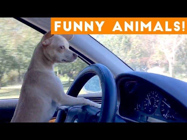 Funniest Pets Animals Compilation Funny Pet Videos Nekat4arabs