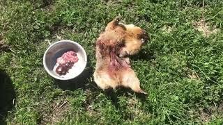 Mongolia 2017 part 6