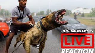 10 MOST INTIMIDATING DOG BREEDS - LIVE REACTION