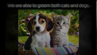 Professional Singapore Mobile Pet Grooming Service - Dirty Paw
