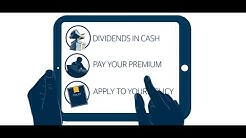 Discover the Power of Dividends