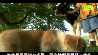 狗狗101---潘布魯克柯基犬 - YouTube.flv