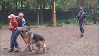 Top 5 most dangerous dogs