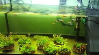УФ стерилизатор SUNSUN JUP-01 против цветения воды