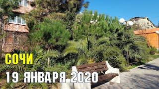 СОЧИ 19 января 2020 | Субтропический рай в отдельно взятом городе