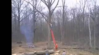 EPIC FAIL !!! cutting a branch of a huge tree