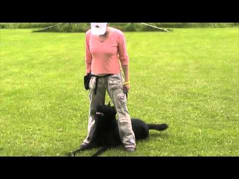 Ackey Levemar - obedience 12 months