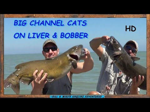 Fishing trip with lonestar catfishing and catfish kings from YouTube · High Definition · Duration:  12 minutes 52 seconds  · 295 views · uploaded on 11/26/2016 · uploaded by LoneStar CatFishing