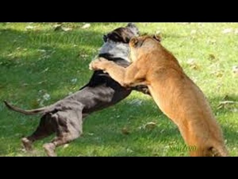 Spectacular attacks of wild animals. Fight for survival. Fighting animals