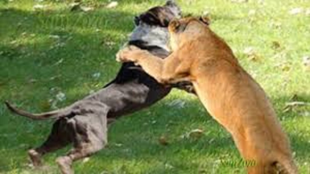 Spectacular Attacks Of Wild Animals Fight For Survival