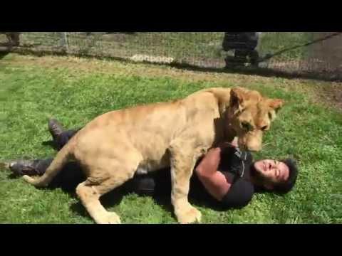 Yıllar Sonra Sahibini Gören Aslandan İnanılmaz Tepki! ( Amazing Lion Give His Owner a Hug! )