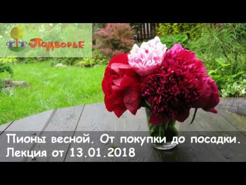 """""""Пионы весной. От"""