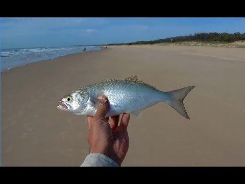 Pilchard Baiting - Sunshine Coast Surf Beach Fishing