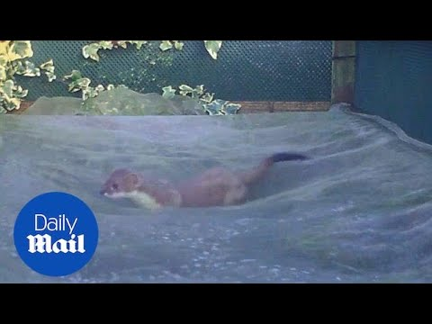 Real life John Lewis advert sees wild animals bouncing around - Daily Mail