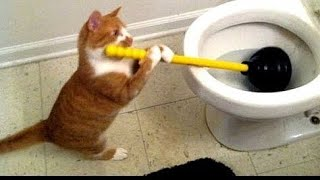 Funny animals, amazing animals. Try not to laugh.