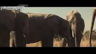 Download Video Gajah Kawin 😂😂 komedi SEPERMA MUNCRAT !!! MP3 3GP MP4