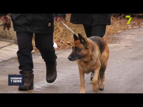 Новости 7 канал Одесса: Чоловіка, що побив поліцейських, арештували