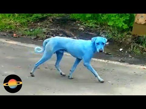 10 nietypowych zwierząt o dziwnych kolorach