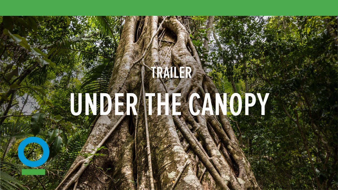 Under The Canopy  Trailer | Conservation International (CI) & Under The Canopy