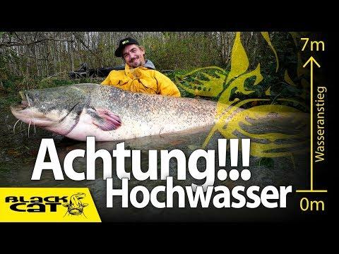 Achtung Hochwasser!!!   Welsangeln im Wald   100 Kilo schwere Waller sind auf der Jagd