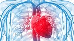CBD and heart health 💚🌱