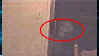 5 Mysterious Creatures Caught On Camera & Spotted in Real Life!!